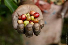 Consumo y Producción Sostenible